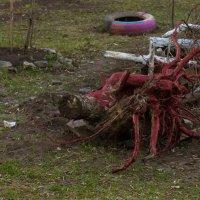 Roots bloody roots :: Дмитрий Костоусов