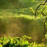 Зеленый туман :: Татьяна Лобанова