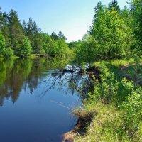 Входят в берега лесные реки... :: Лесо-Вед (Баранов)