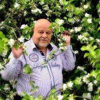 Яблоня в цвету. :: Михаил Столяров