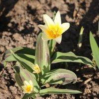 Весна :: Наталья Герасимова