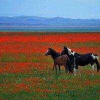 Весна :: Андрей Гомонов
