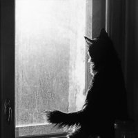 за окном птичка :: Лера