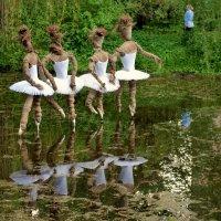 Балерины на пруду! :: Татьяна Помогалова