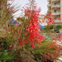 Тропическое растение.Название уточняется. :: Жанна Викторовна
