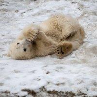 У каждого медвежонка своя лапа слаще :: Владимир Максимов