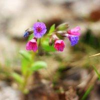 Майские цветочки :: Натали