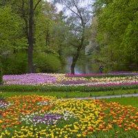 цветочная полянка :: Наталия П