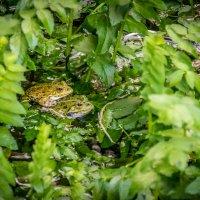 из серии Nationalpark Krka Croatia :: Konstantin Rohn