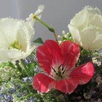 Майские тюльпаны :: Mariya laimite
