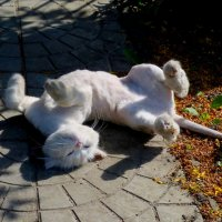 про котиков 4; стриженый под пуделя :: Александр Прокудин