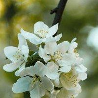 Весна :: Денис Быстров