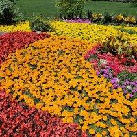 Цветочная поляна :: Александр