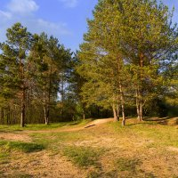 На окраине леса :: Вадим Sidorov-Kassil