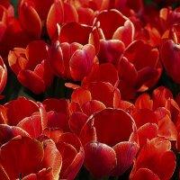 Яркий и цветущий месяц май :: Nikolay Monahov