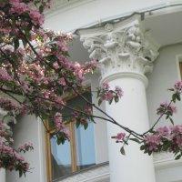 Весна :: Маера Урусова