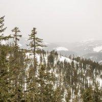 Сопки в тумане :: Александр Паклин