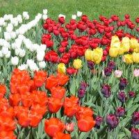 краски весны :: надежда