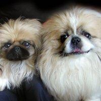 Леля и Гоша. :: Nata