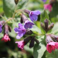 весенние цветочки :: Елена Иванкина