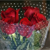 Букет роз :: Ольга Мореходова