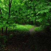 Самое зеленое время года :: Андрей Лукьянов