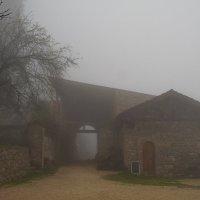 Кахетия в тумане :: Александр С.