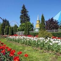 Цветы :: Сергей
