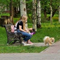 Двое на скамейке, не считая собаки...) :: VADIM *****