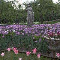 Изобилие весны :: Александра