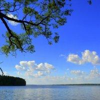 Учинское водохранилище :: Ольга (crim41evp)