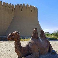 Верблюд у крепостной стены. :: Anna Gornostayeva