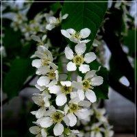 Май в саду :: muh5257