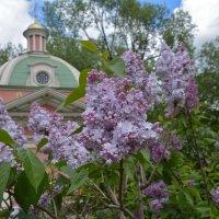 В парке весеннем :: Larisa Simonenkova