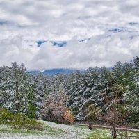 после снегопада :: Alexandr Staroverov