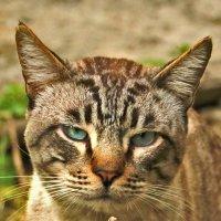 Портрет мрачного кота :: Светлана