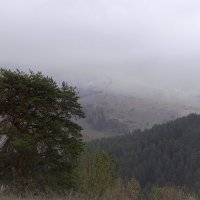 Белокурихинские туманы. :: Елена Тренкеншу
