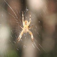 паук :: Димончик