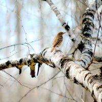Лесной этюд :: Татьяна Лютаева