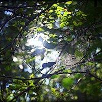 Паутинка в листве. :: Любовь