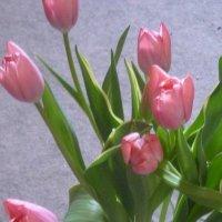 Только весной... :: Татьяна Юрасова