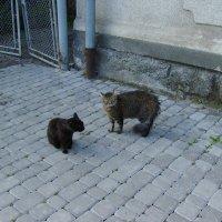 Ивано - Франковские   коты :: Андрей  Васильевич Коляскин