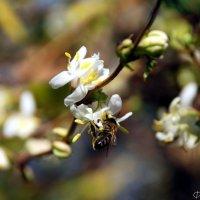Пробуждение весны :: Наталья Каракуца
