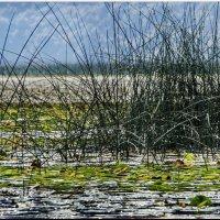 За тростниковой занавеской :: Vanda Kremer