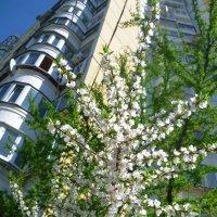 Весна :: Ольга (crim41evp)