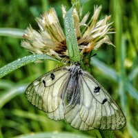 Бабочка и капля :: Юрий Стародубцев