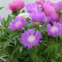 цветы :: Юрий