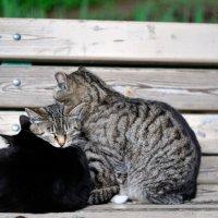 санаторские кошки... :: Андрей Вестмит