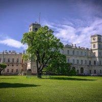 Гатчинский дворец летом. :: Евгения Кирильченко