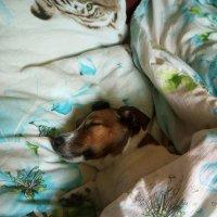 Вот такая собачья жизнь! :: Алексей Ларин